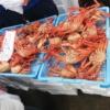 3月の食彩市で売っていた驚きの魚とは!?