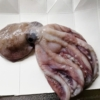 水ダコを刺身と唐揚げで食べてみた。【安いのにマダコに匹敵!?】