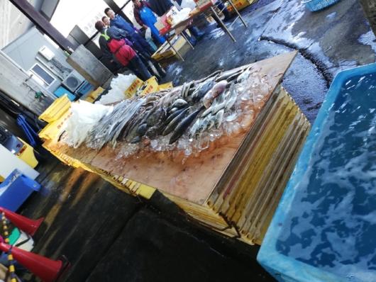 鮮魚販売の魚の陳列